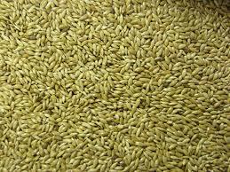 Plain Canary seed 1kg